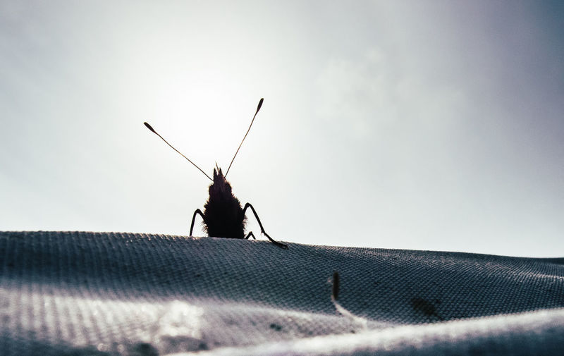 Surface Level Of Insect Against Clear Sky