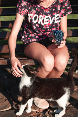 Girl holding cup filled with fresh blueberries and playing with cat. Girl wearing flowery red blouse and sitting on bench in the garden. Vertical shot Berries Dessert Eating Freshness Life Woman Young Berry Blueberries Blueberry Enjoying Enjoyment Female Food Fresh Fruit Garden Girl Healthy Joy Organic Outdoors person Summer Sweet