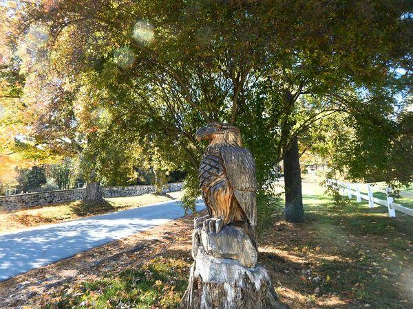 Then I ran into an Eagle. Eagle Treeart Sculpture