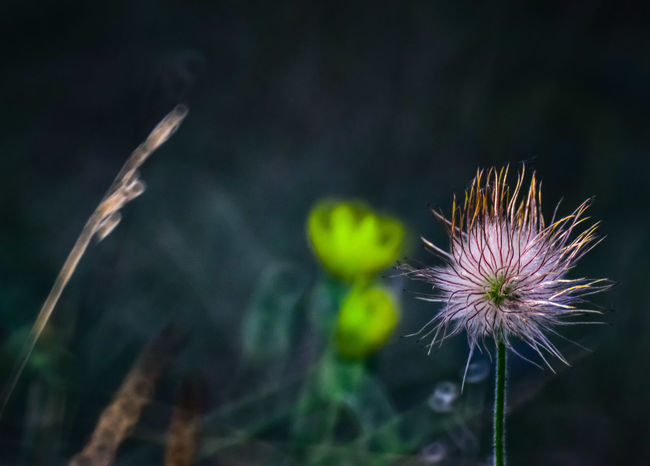 Flower Fragility Plant Nature Purple Freshness Beauty In Nature Close-up Outdoors Uncultivated Focus On Foreground No People Thistle Day Flower Head Growth Sky Beauty Nikon Nikon_photography Nikonphotographer Nikon D3200 500mm 500mm Lens Samyang