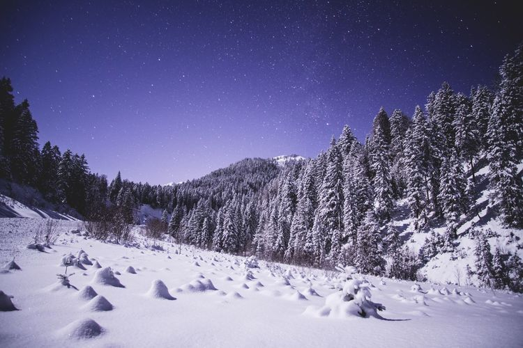 Snow Tree Winter Sky Stars Nightsky Landscape