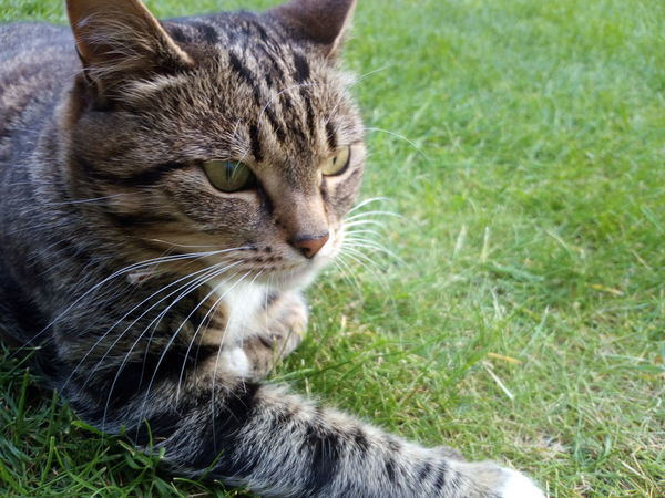 Chilling Outside Domestic Cat Grass Domestic Animals Animal Themes Pets One Animal Feline Mammal Field Day Outdoors Whisker Close-up No People Sitting Nature