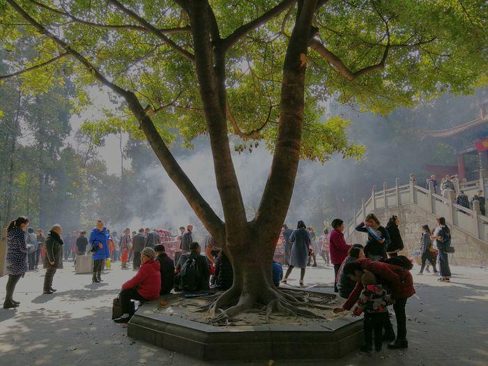 Tree City Women
