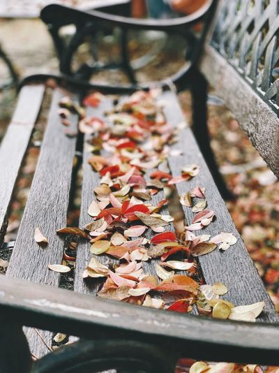 """""""Autumn Gathering"""" Colorful Autumn leaves gather on a park bench in their last declaration of independence. Autumn Fall Colors Fall Autumn colors California Fall Beauty Autumn Collection Autumn Leaves Fall Leaves Park Bench Park Benches No People Focus On Foreground Close-up Outdoors Selective Focus"""