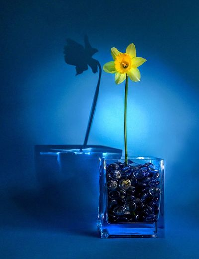 Yellow Daffodil In Vase Against Wall