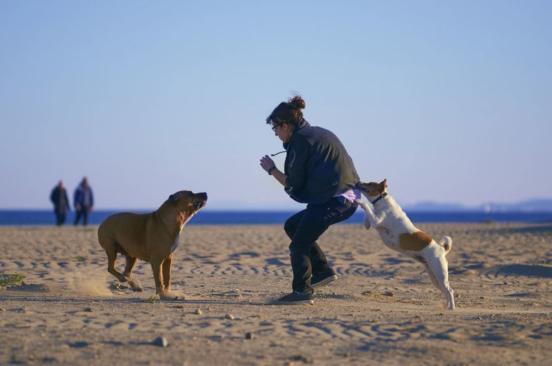 Woman playing with her dogs on a beach. Amstaff Breed Happy Mediterranean  Mestizo Run Woman American Staffordshire Terrier Animal Beach Coast Dangerous Dog Girl Pet Play Podenco Relax Russel Sea Sunrise Sunset Sunshine Terrier