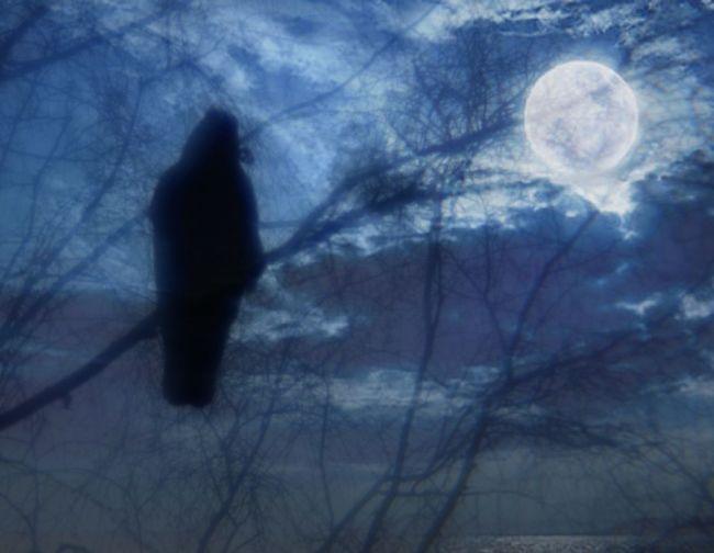 The Raven Night Scene Night Bird Edger Allen Poe