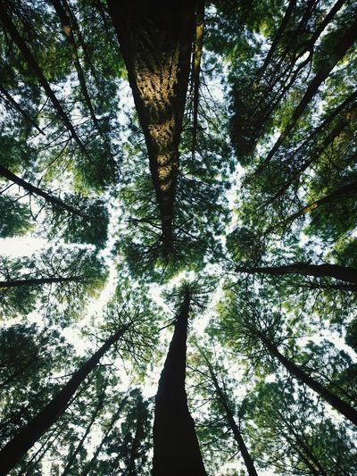 Vscocam #vsco EyeEm Nature Lover Hugging A Tree The Illusionist - 2014 EyeEm Awards