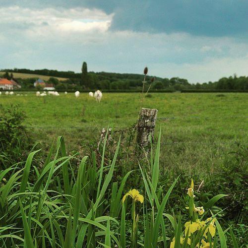 Grandchamp Coeurdepuisaye Puisaye Nature yonnetourisme yonne igersbourgogne iris grainedenature