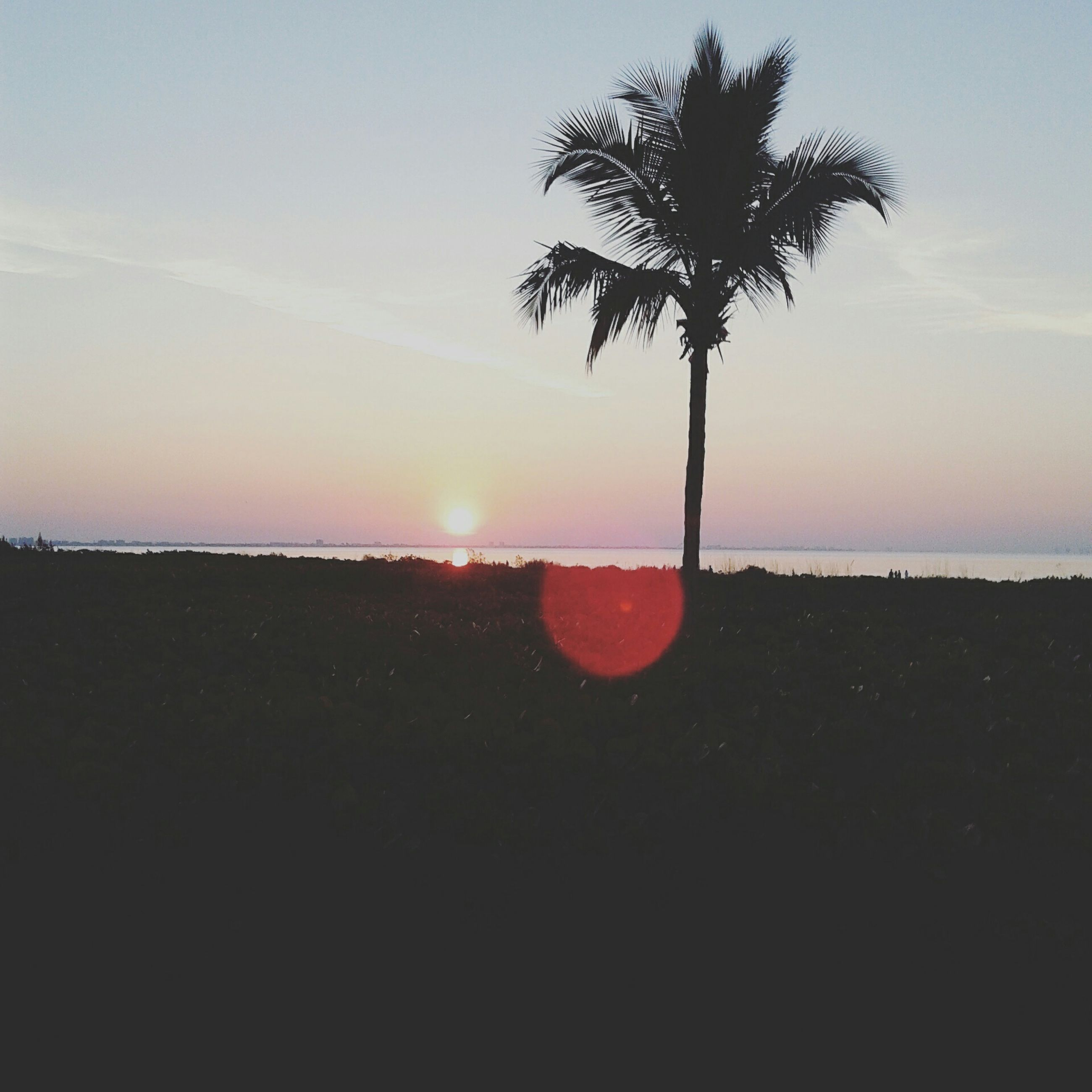 sunset, horizon over water, sea, tranquil scene, scenics, tranquility, silhouette, beauty in nature, water, sun, beach, sky, tree, palm tree, nature, idyllic, orange color, shore, growth, outdoors