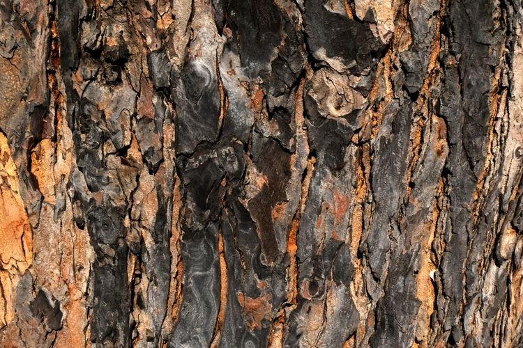 tree bark texture Tree Bark Tree Bark Wood Backgrounds Close-up Full Frame Nature Outdoors Textured  Tree Tree Bark Beauty Tree Bark Close Up Tree Bark Texture Wood - Material