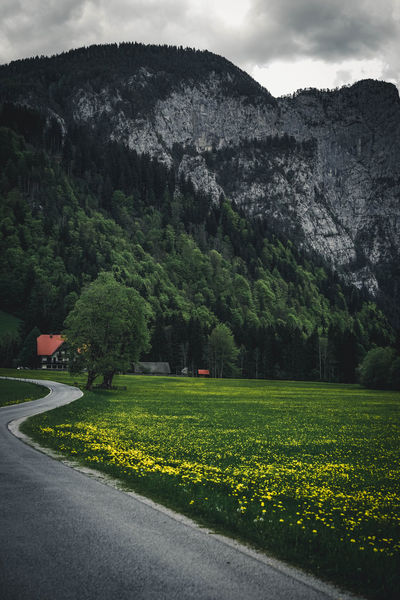 MOODY ROADS Beauty In Nature Beauty In Nature Dark Darkness And Light Flower Flowers Grass Landscape Mood Moody Sky Mountain Mountains Natural Beauty Nature Nature On Your Doorstep Nature Photography Nature_collection Naturelovers Road Roadtrip Sky Sky And Clouds Streetphotography Tree Yellow