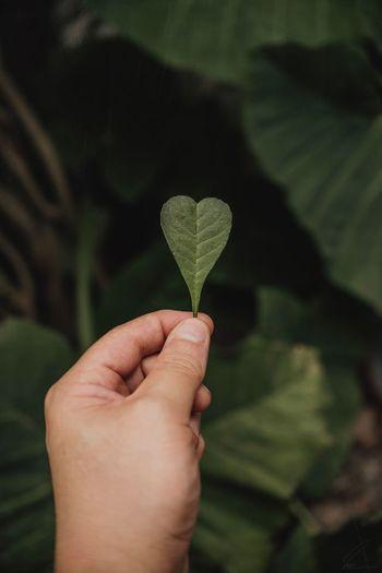 Human Hand Leaf