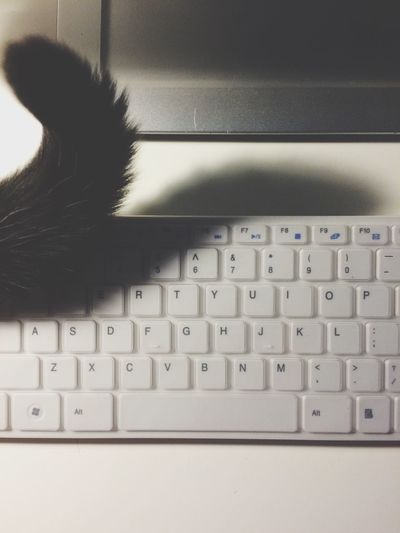 Cat Tail Keyboard Work Picture
