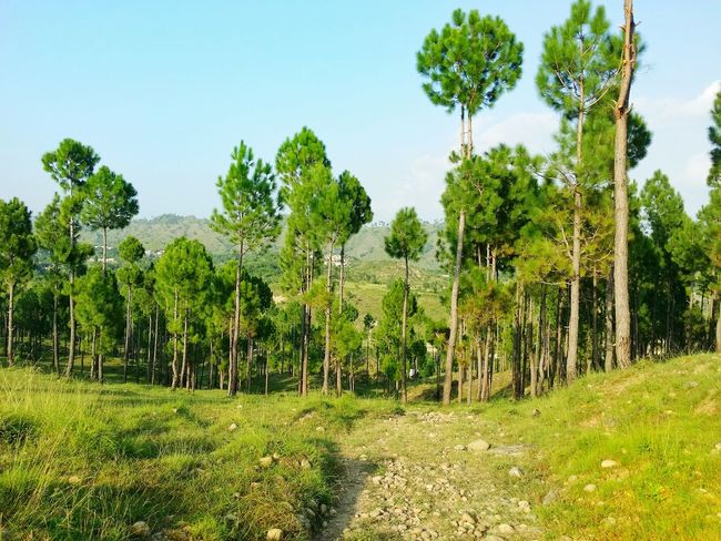Love It Beautiful Nature Amazing View Love Greenery Tall Trees Blue Sky Summer Hot Pebbled Path