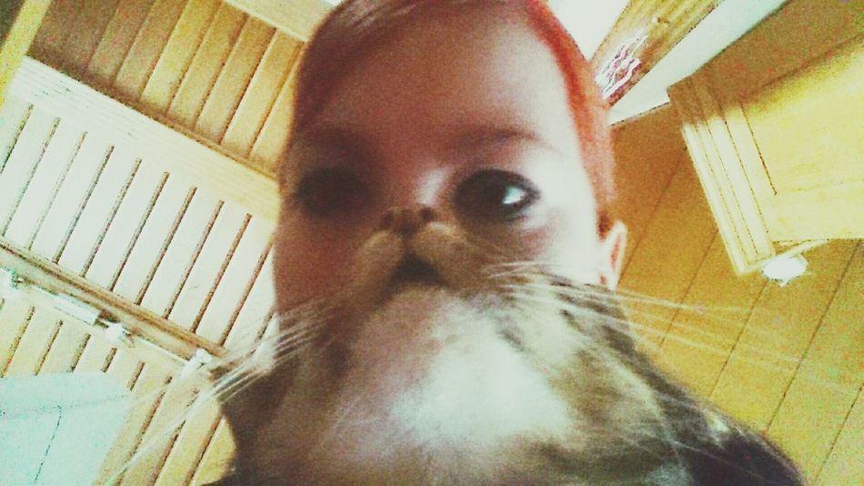 Inmemoryof Mycat♥ Lovehersomuch Katzen Katzen 💜 Katzenfoto Loveher❤ Meinekatze Me