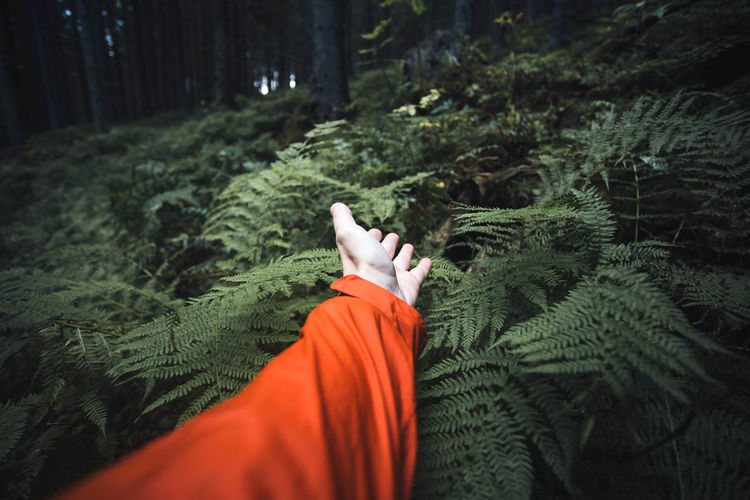Close up of survival concept of a man looking for help and searching directions in the jungle-forrest Plants The Creative - 2018 EyeEm Awards Body Part Close-up Day Fern Ferns Finger Green Color Growth Hand Human Hand Leisure Activity Lifestyles Low Section Nature One Person Outdoors Personal Perspective Pine Tree Plant Real People Selective Focus Survival Tree