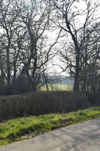Taking Photos Relaxing Hedges Shadows Countryside Uk Trees Field Nikond3300