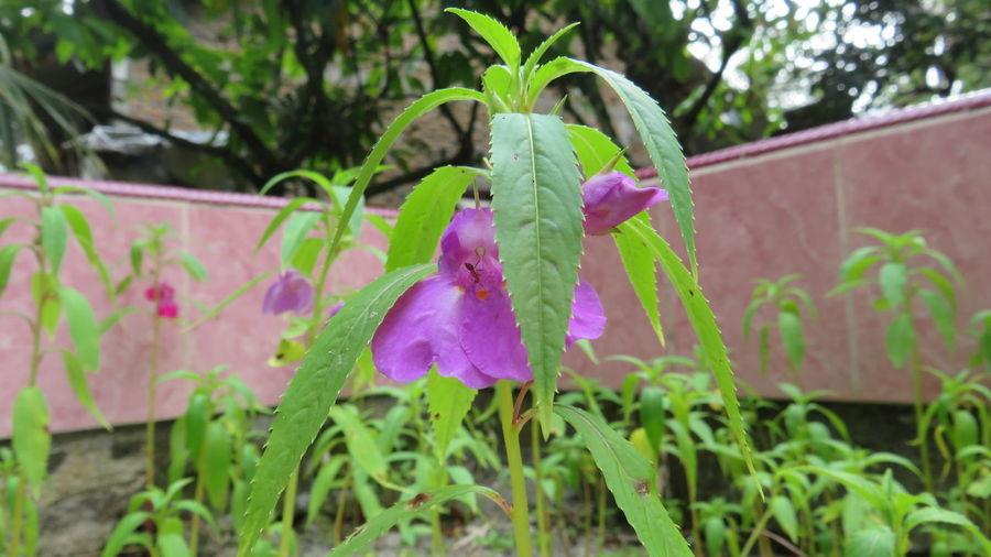 Flowering Plant Plant Nature
