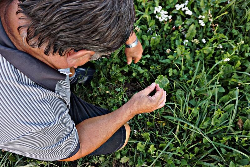 High angle view of man picking plant on field