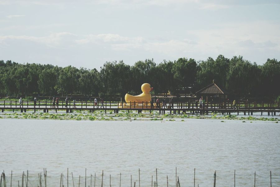 China Photos Lake View Rubber Duck Walking Around People Watching Taking Photos Travel Fresh Scent Relaxing Streamzoofamily