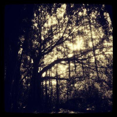 Age old banyan tree Amazing Beautiful Beauty B &wGreen Instanature InstaMagic Instashot Instasky Instawood Light Love Nature Photooftheday Picoftheday Pretty Tree Trees Woods Ahd Goa Peaceout