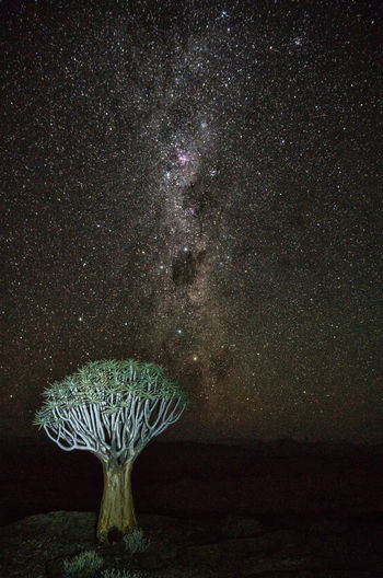 Milky Way over Quiver Tree in Namibia Namibia Night Photography Nightphotography Quiver Tree Africa Astro Astronomy Astronomy Photography Astrophotography Beauty In Nature Constellation Galaxy Milky Way Nature Night Nightsky Nightskyphotography Outdoors Quiver Quivertree  Scenics - Nature Sky Space Star - Space Tranquil Scene