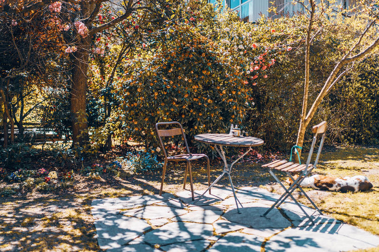 Table and chairs in park during autumn