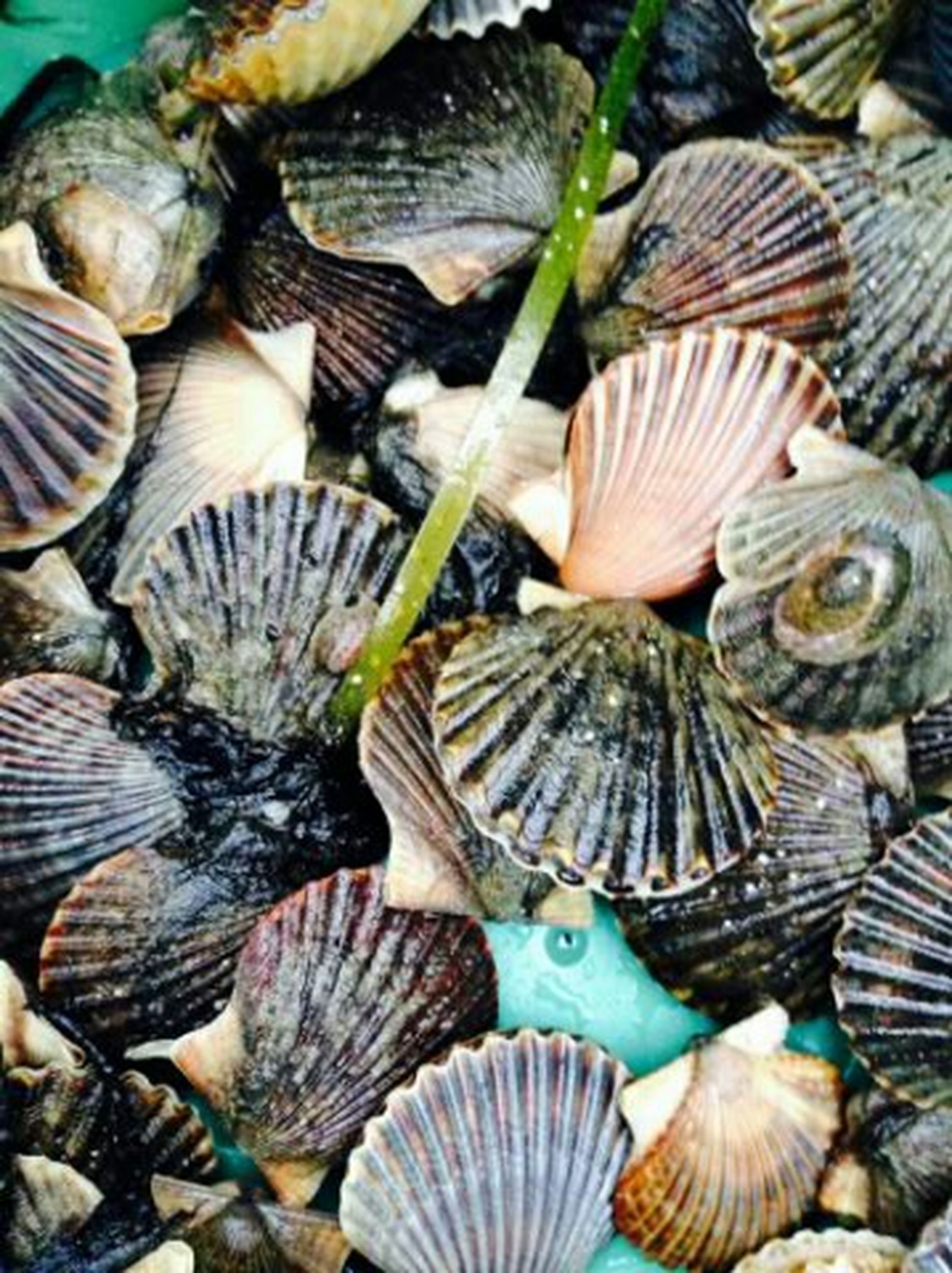 animal themes, for sale, seafood, abundance, full frame, fish, high angle view, variation, market, healthy eating, raw food, wildlife, backgrounds, close-up, animals in the wild, animal shell, food, food and drink, indoors, retail