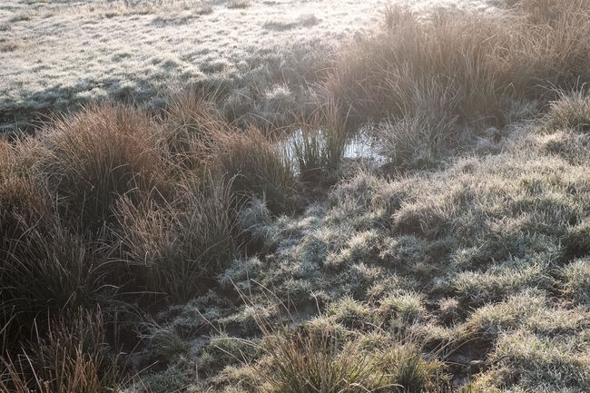 Chilly morning Chilly Frosty Light Mood Morning Spring Sunrise Water