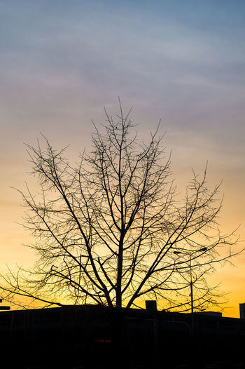 Day 38! I need to find interesting topic, not only to be dependent on random sunsets.... 365 365 Day Challenge 365project Branch Cloud - Sky Day Nature No Leaves No People Outdoors Silhouette Sky Sunset Ursynow Warszawa  Yellow