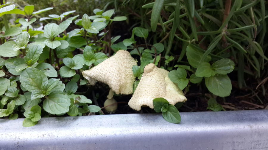 from dirt grows the flowers Funghi