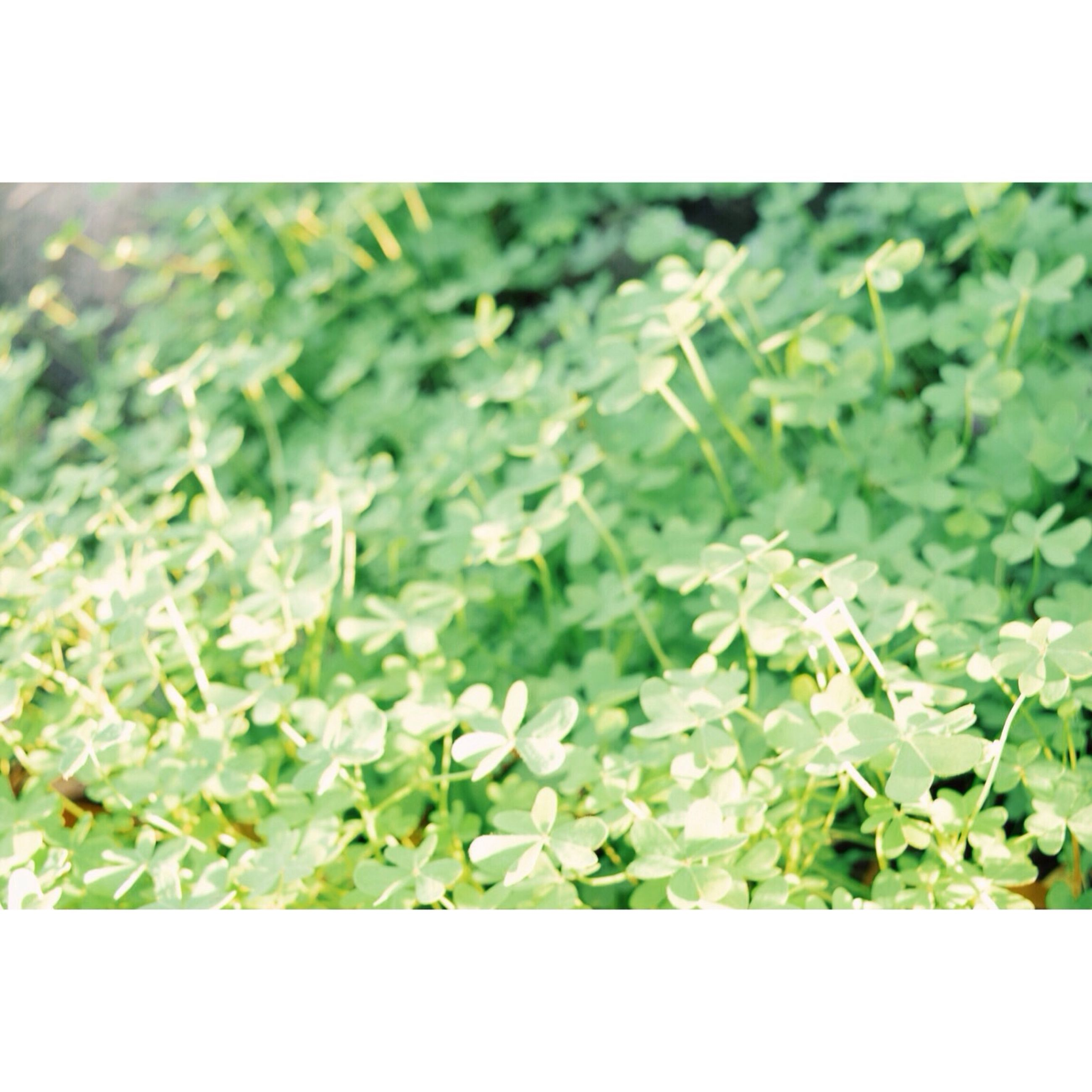 transfer print, auto post production filter, green color, growth, plant, leaf, nature, freshness, field, close-up, beauty in nature, green, selective focus, fragility, day, flower, outdoors, high angle view, no people, growing