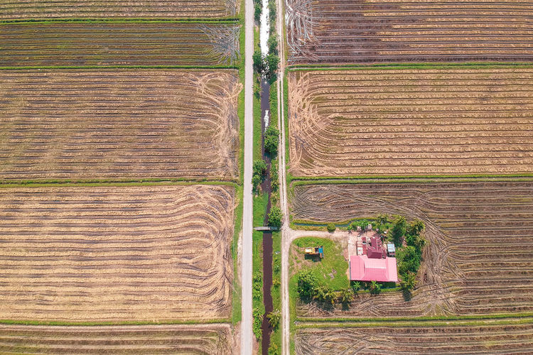 Rural Scene Cereal Plant Agriculture Rice Paddy Aerial View Plowed Field Field Plough Pattern High Angle View