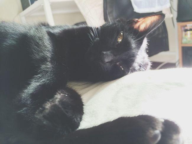 享受沐光浴中? Pet Photography  Love My Cat Black Cat My Cat
