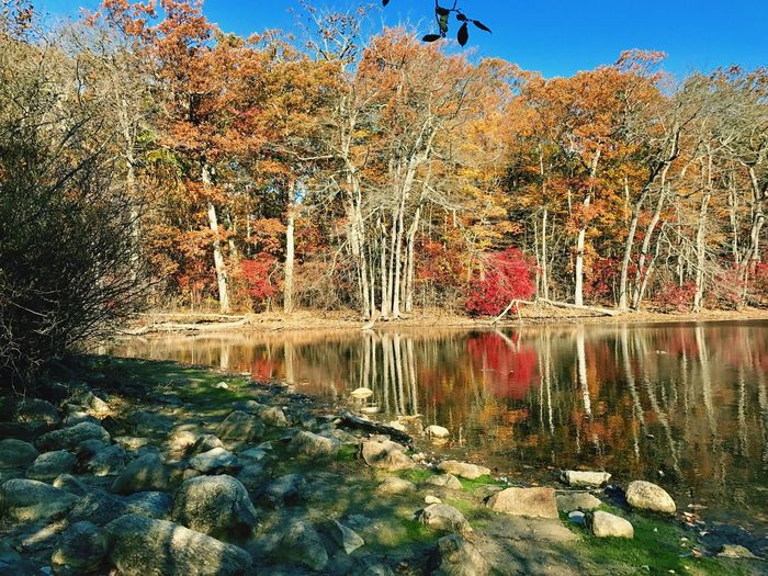 CaumsettStateParkInAutumn Water Nature Beauty In Nature Tranquility Autumn Colors Autumn Leaves Autumn🍁🍁🍁 Caumsett State Park Long Island, Ny Lake Pond Reflection