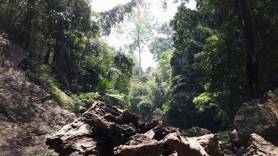 Beauty In Nature Chianf Chiang Mai | Thailand Forest Green Nature No People Outdoors Tree Walden