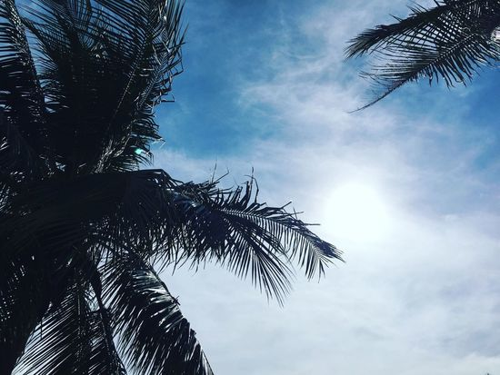 Coconut Coconut Trees Coconut Tree Coconuts Coconutwater Coconutpalm Sun Sunshine ☀ Sunshine Sun_collection Sky Clouds And Sky Cloud Clouds Blue Bluesky
