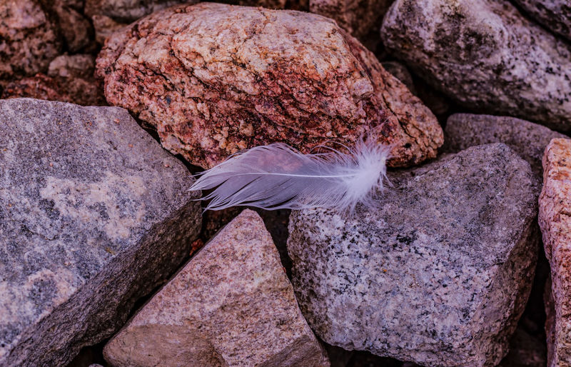 Close-up of feather on rock