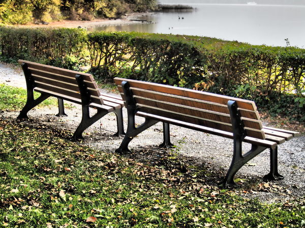 Seat Plant Nature Bench Empty No People Growth Tranquility Beauty In Nature Day Absence Lake Tree Grass Water Scenics - Nature Park Green Color Field Outdoors Park Bench