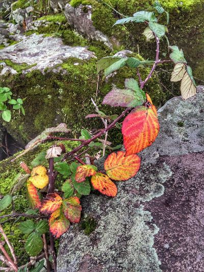 Autumn Leaf Change Outdoors Beauty In Nature Nature Growth Leaves Close-up Moss & Lichen Still Life Weathered Scenic Stone Abstractions View Perspective Layers And Textures Shapes In Nature  Abstract Nature Natural Condition Views Plant Textured  Scenics
