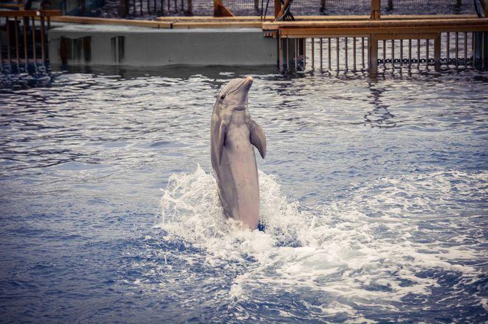 Delfinario, Oceanografico (Valencia - Spain) Animal Themes Water Jumping Vitality Swimming Splashing Outdoors Nature Travel Tourism Valencia, Spain SPAIN Oceanographic