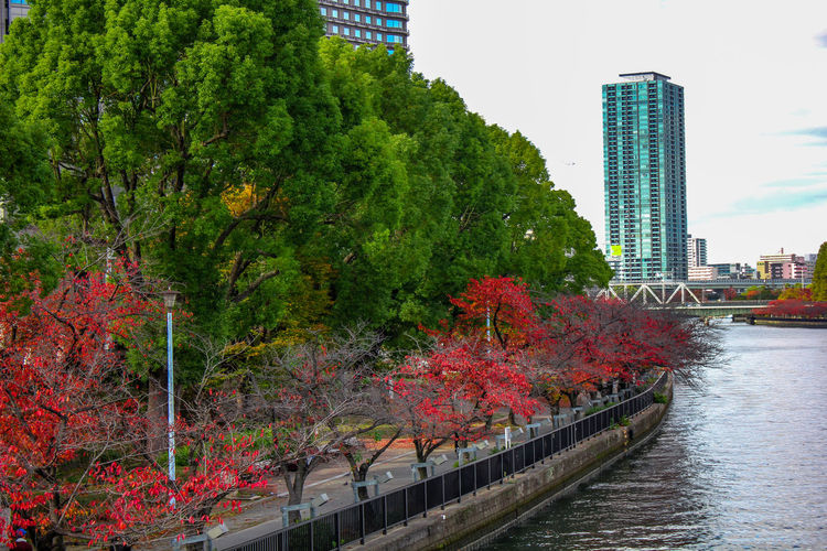 Trees by river against buildings in city