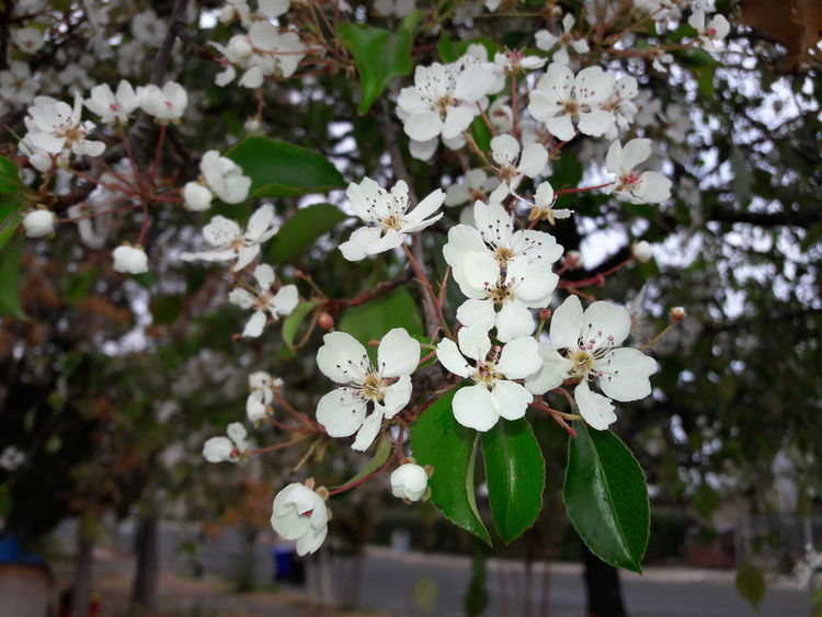 White Color Close-up Fragility Hanging Springtime Day Tree No People Branch Flower Nature Outdoors Freshness Beauty In Nature Flower Head