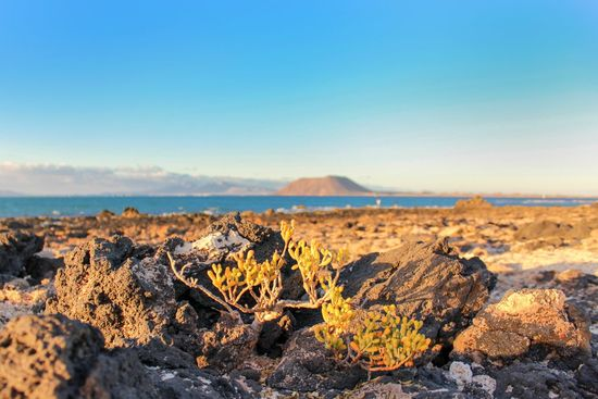 Landscape Plant Blue Rock - Object Nature Sunset Sea Outdoors Horizon Over Water Beauty In Nature Scenics Sky Day Fuerteventuraexperience Vacations Canary Islands Cloud - Sky Beauty In Nature Corralejo Sunset Silhouettes Sunny Day Amazing View Travel Destinations Ocean