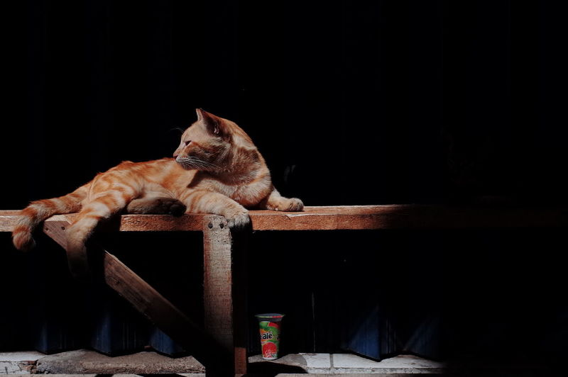Cat resting on wooden table