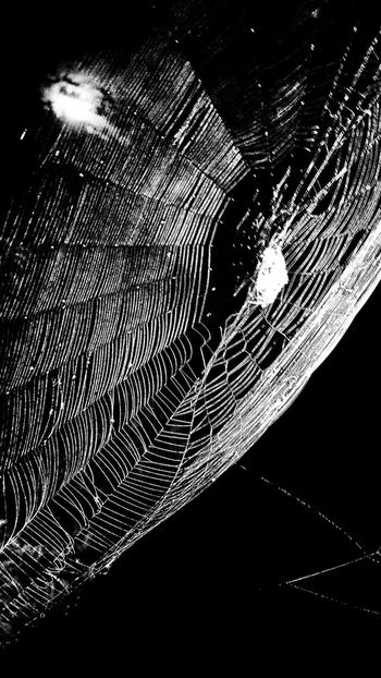 Spider Spider Web Moon Light Moonlight Moon In Black Sky Moon And Clouds Backlit Backlit Spider Web Black And White Blackandwhite Photography Night Photography Night Animal Insect Insects At Night Insects  Insect Photography Insect Collection Showing Mood Mood Moody Sky Web Spider Hunting Spider Webs Hunting Overnight Success