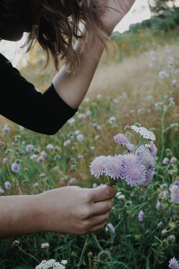Cropped Hands Of Young Woman Picking Flowers At Park