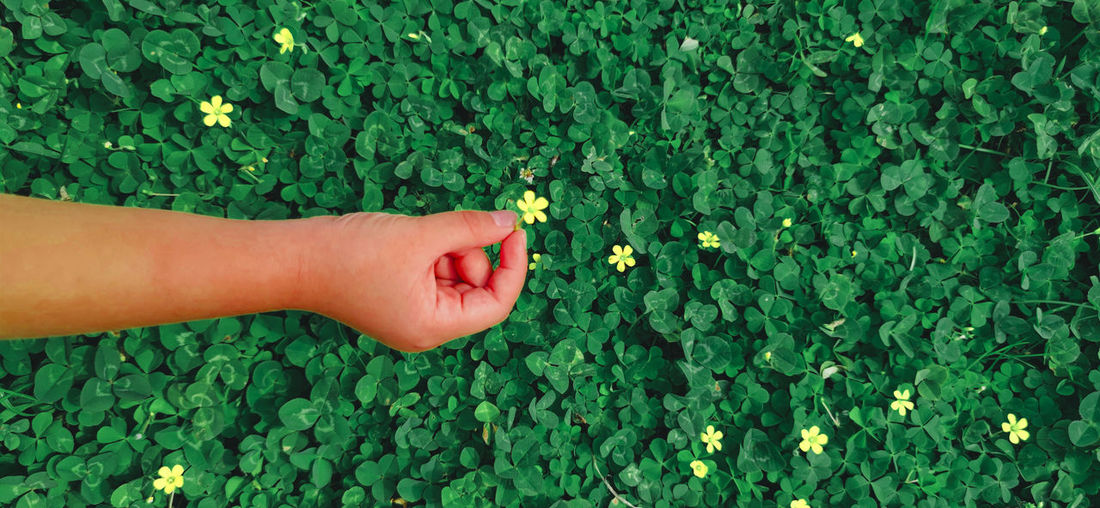 Midsection of woman hand on flowering plants