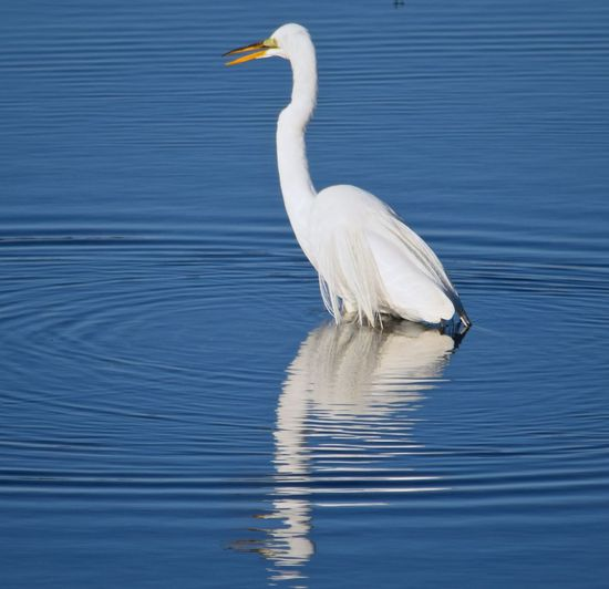 Crane perching amidst lake